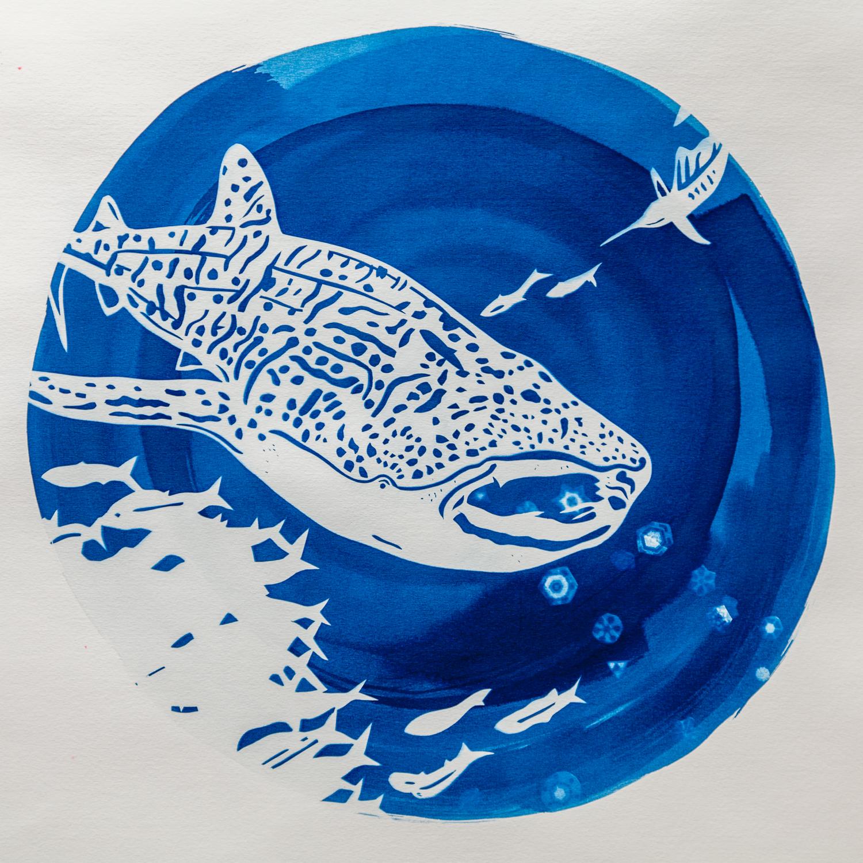 Whale Shark, photo: Ian Whitmore